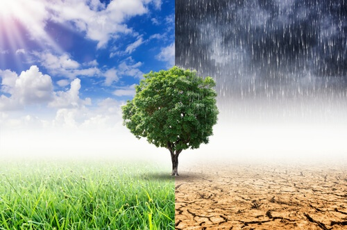 Wie sich Baerbock beim Klima verhedderte – oder die grüne Klimawandel-Homöopathie